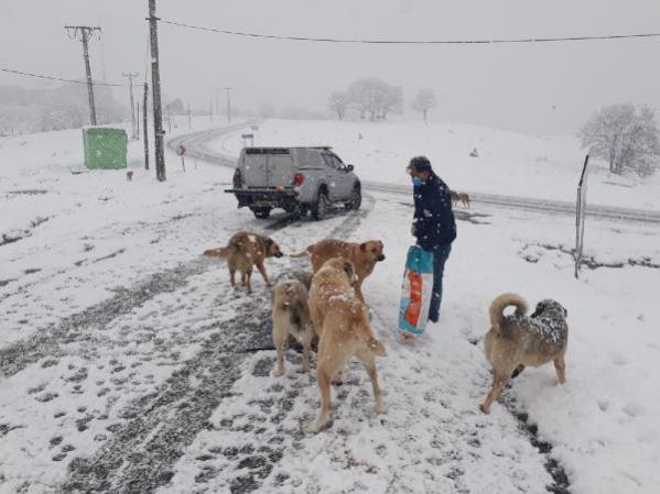 Karda yiyecek bulmakta zorlanan köpekler için mama bırakıldı