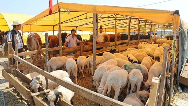 Darıca'da kurban pazar alanı satışları başladı
